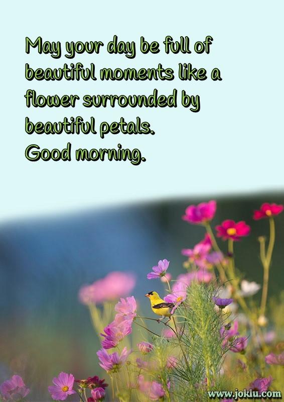 Beautiful petals good morning message