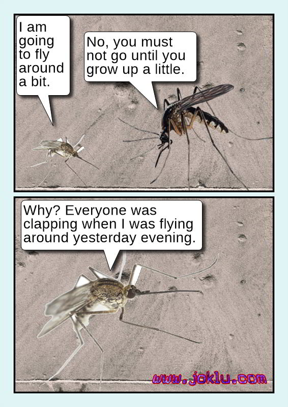 Day of a mosquito joke in English